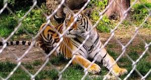 Miller Zoo
